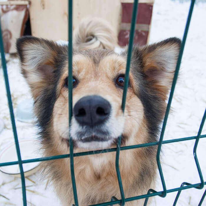Sevimli Evcil Dostlarınız İçin Köpek Kafesleri Yapıyoruz